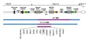 síndrome de Potocki_Lupski ( ptls) Base de datos de genes